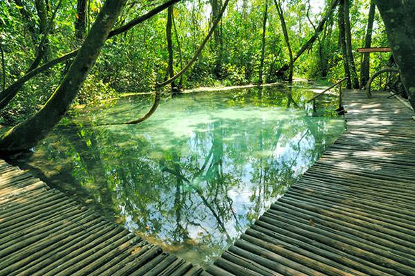 nascente do rio tamanduá